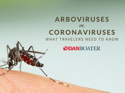 aedes aegypti mosquitoes spread arboviruses