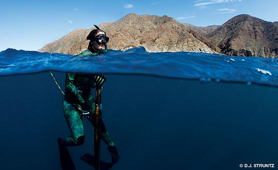 diver in the water spearfishing